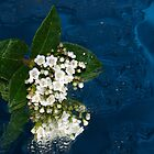 Floating Flowers by Lisa  Wilson