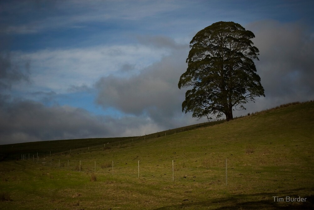 Tree on a Hill by Tim Burder