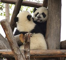 baby pandas by gail