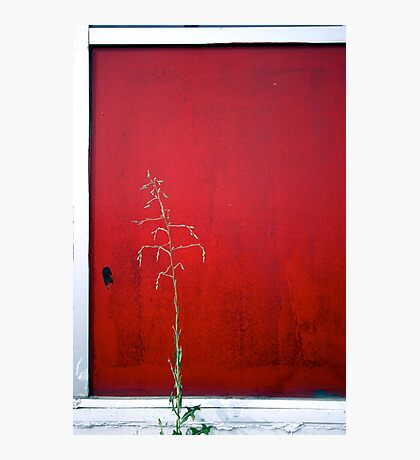 Lonely Weed Photographic Print