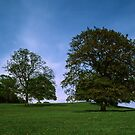 Trees and farmland Troutbeck England 198405190005  by Fred Mitchell
