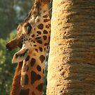 Giraffe by Kathryn Steel