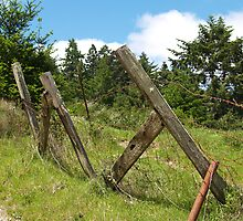 Old Fence by JavaMama730