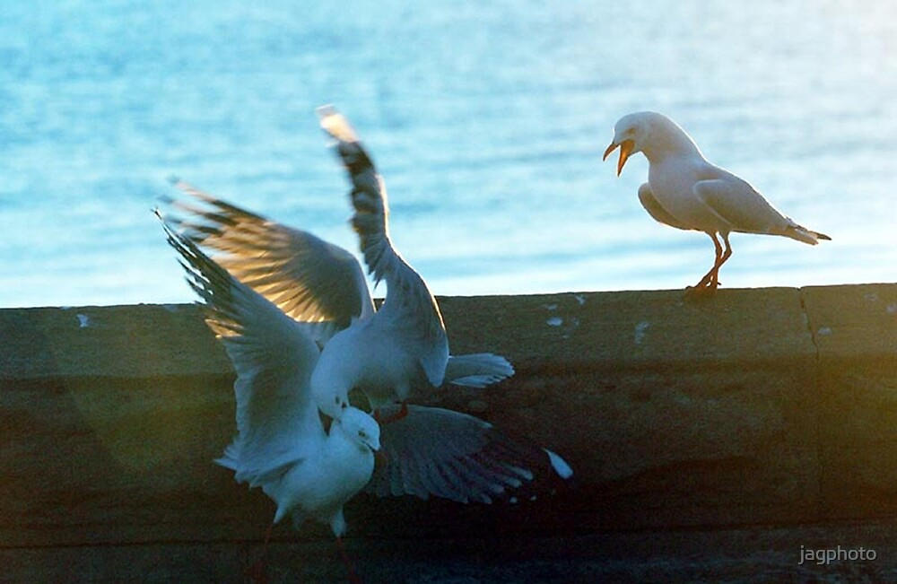Gulls Attack by jagphoto