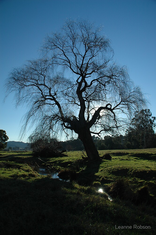 Naked Tree by Leanne Robson