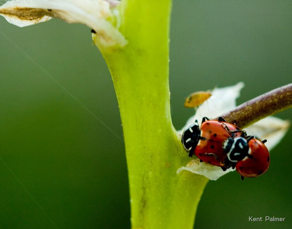 Bug Race by Kent  Palmer