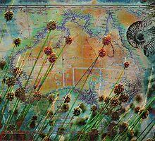 Sedges by Sabine Spiesser