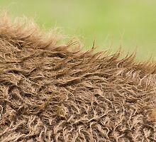 On the buffalo's back by David Burren