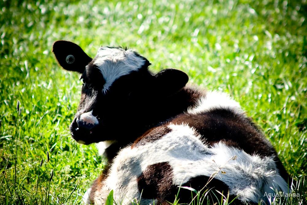 Calf by AquaMarina