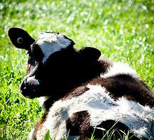 Calf by AquaMarina