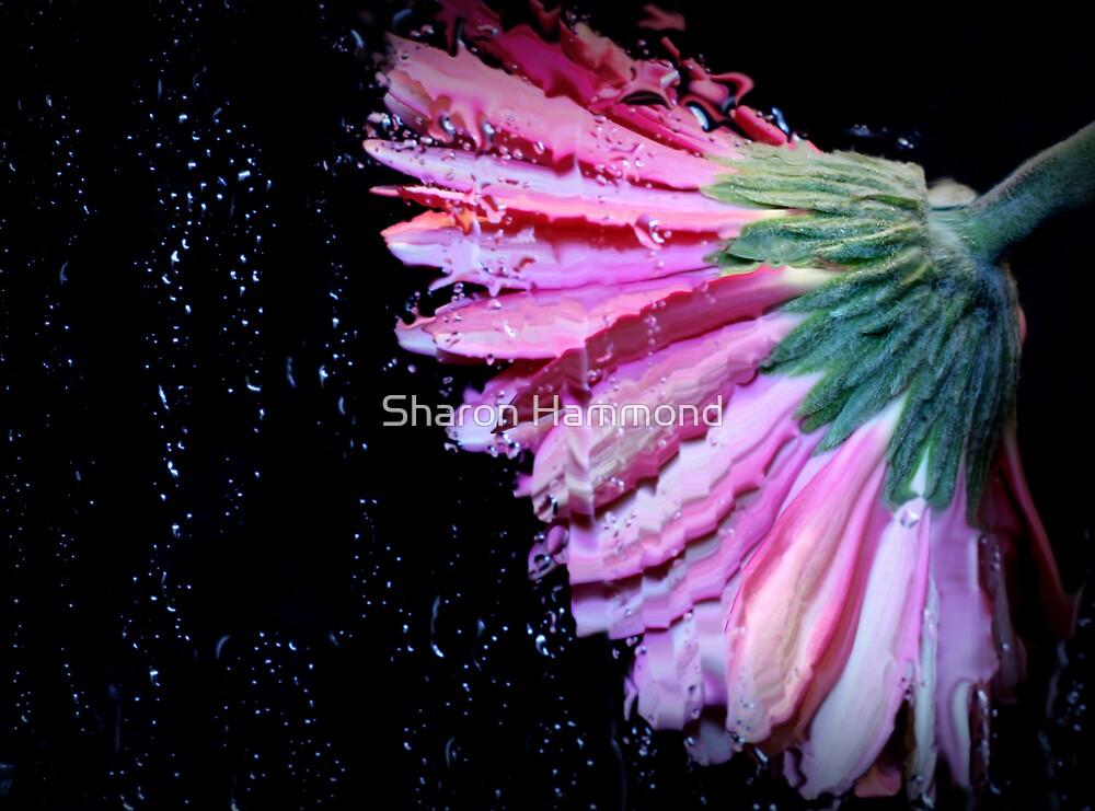Rain by Sharon Hammond