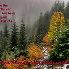 Have a Blessed Christmas by Charles & Patricia   Harkins ~ Picture Oregon