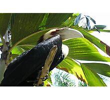 Bali Bird at Park Photographic Print