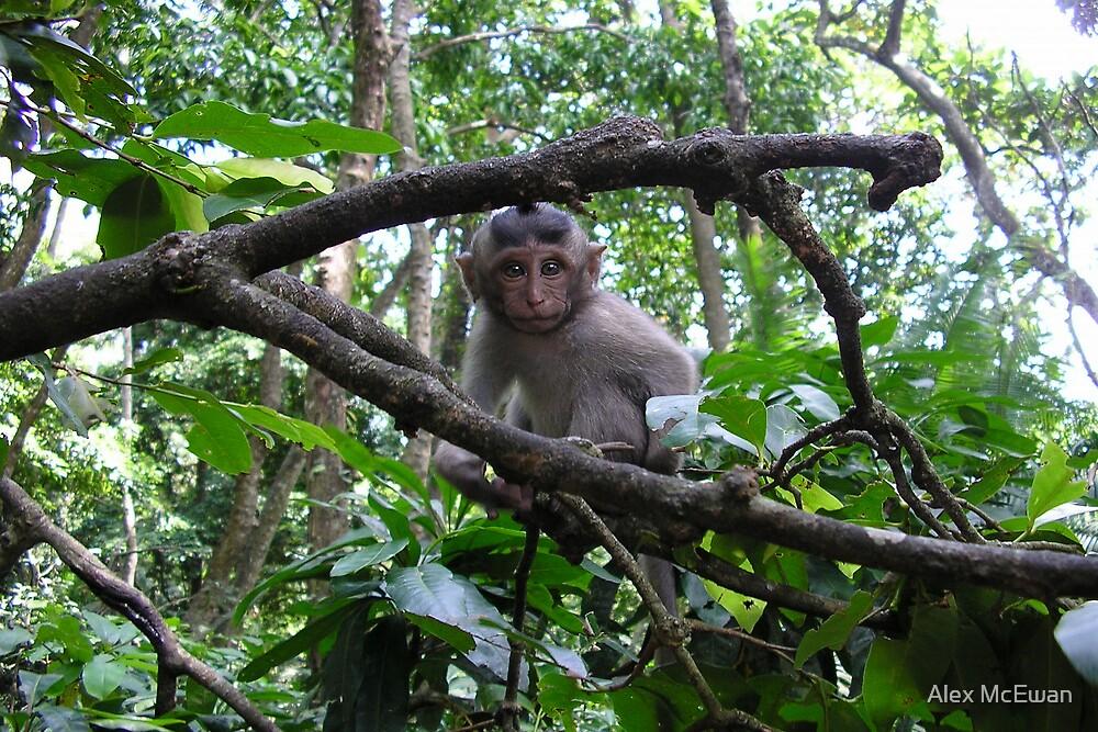 Baby Monkey in a Tree by Alex McEwan