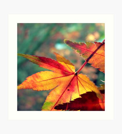 Softly Fall II Art Print