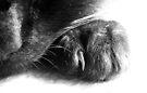 Paw by Tiffany Dryburgh