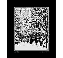 Companion Solitude Fine Art Poster Photographic Print