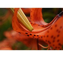 Nature's Curves Photographic Print