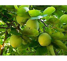 Fresh Fruit    ^ Photographic Print