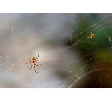 Mrs Spider Photographic Print