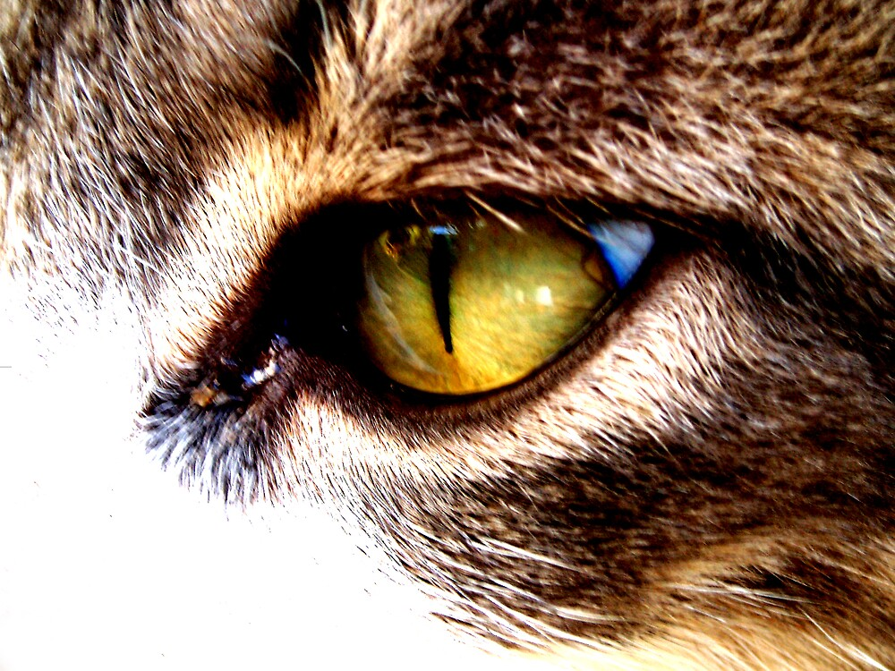 cat eye by aprilmacdee