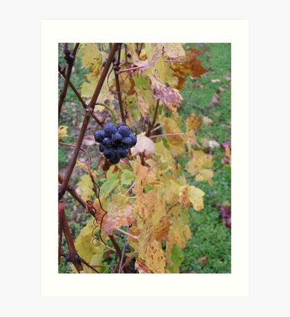 Pinot noir of Beaune Art Print