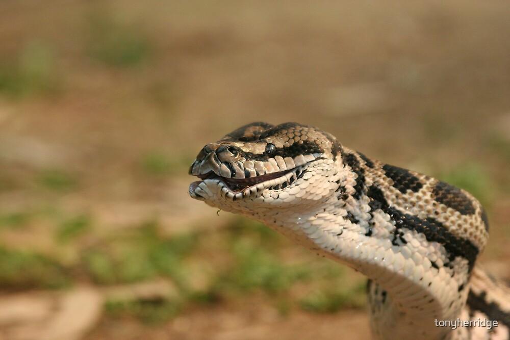 python 4 by tonyherridge