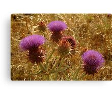 Purple Thistle,Geelong District Canvas Print