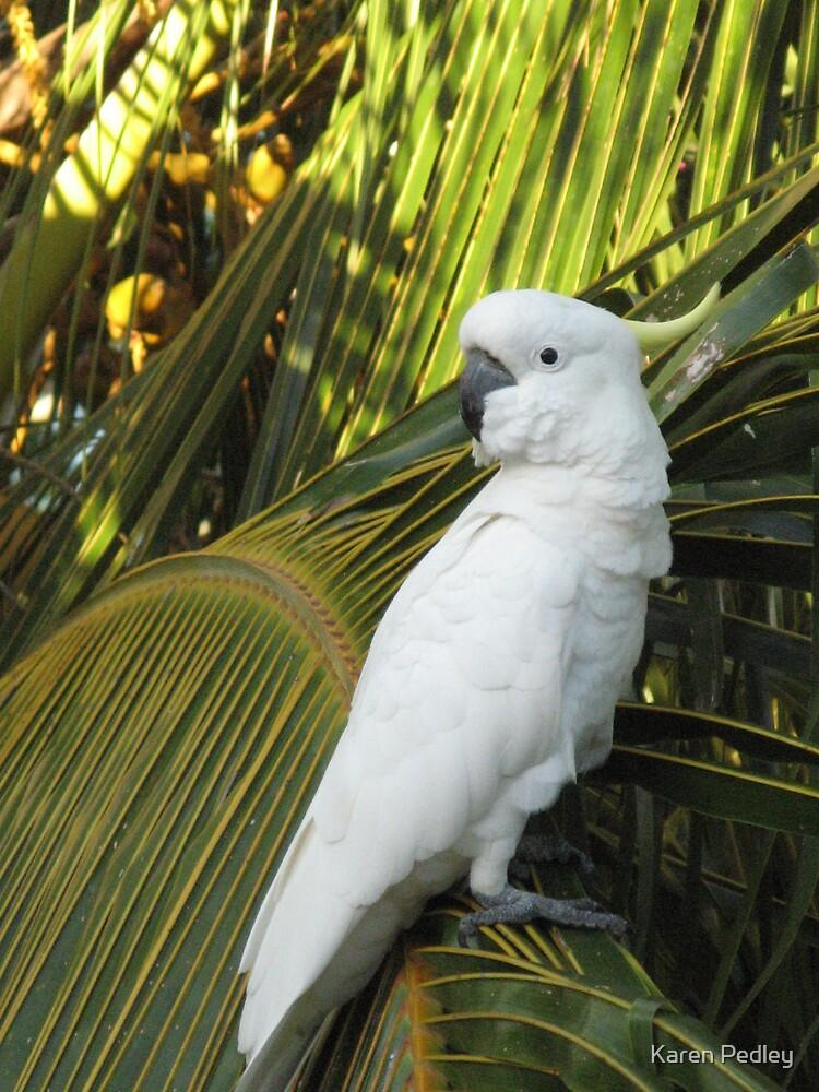 Cockatoo by Karen Pedley