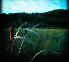 Cat-O-Nine Tails in a Swamp by Nazareth