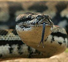 python 1 by tonyherridge