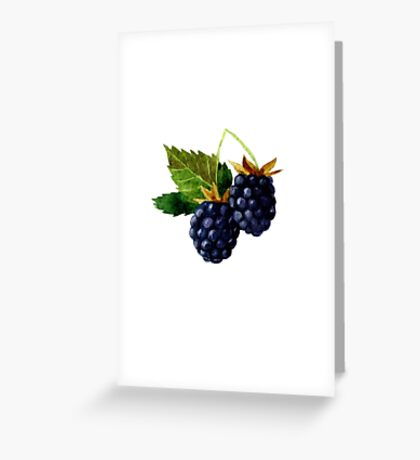 Watercolor illustration with berries and blackberry leaves. Greeting Card