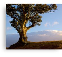 Durability and Strength, Wilpena, South Australia. Study #5 Canvas Print