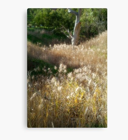 Grasses, Waurn Ponds Creek Bed Canvas Print