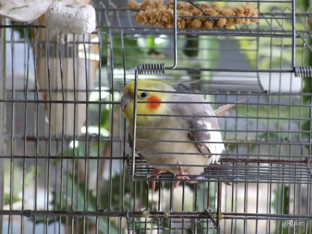 Birdie by Ryian