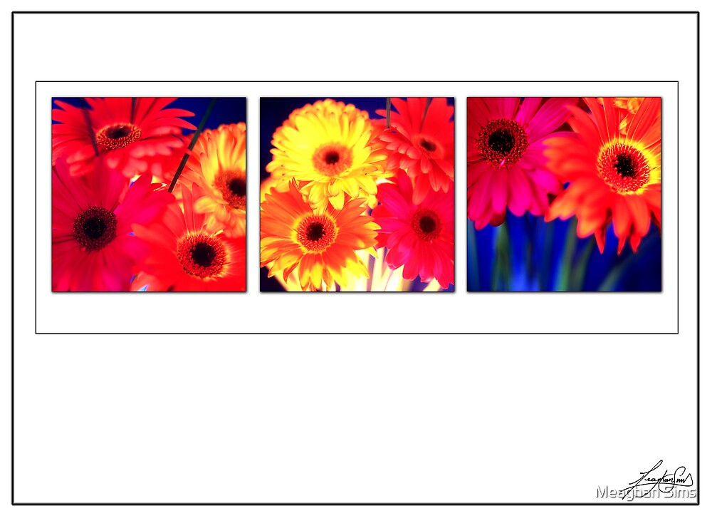 Gerberas by Meaghan Sims