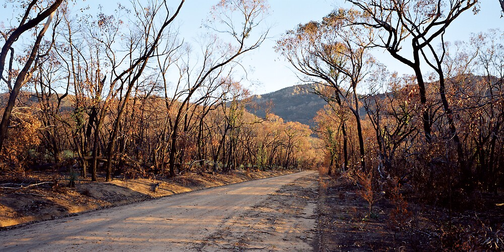 Asses Ears Road After Bushfire, Grampians 2006 by Brian Murray