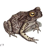 Toad by Lars Furtwaengler