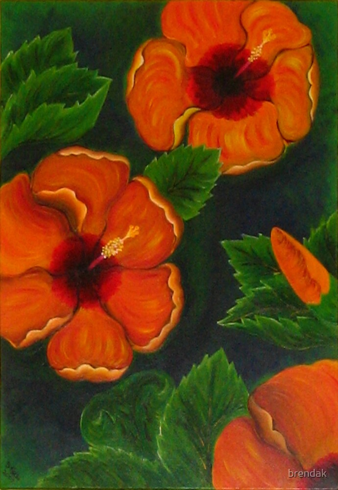 Hibiscus by brendak