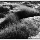 Native Grass by Brian Murray