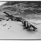 Mungo fallen log by Brian Murray