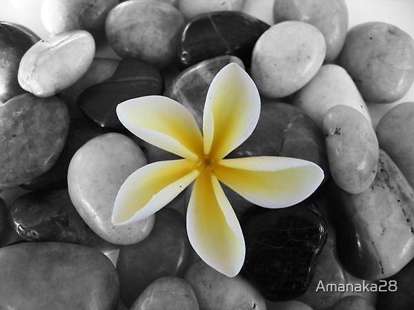 Flower by Amanaka28