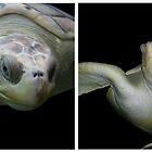 Turtle Panel by 3rdEyeOpen