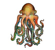 Octopus or Squid? It's a Cephalopod! Photographic Print