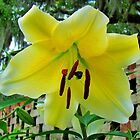 Lily By The Wall by Cynthia48