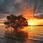 Mangrove tree II by andreisky