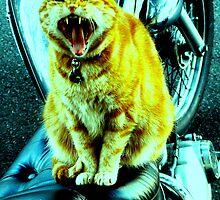 Fierce Bikie Pussy by Robert Knapman