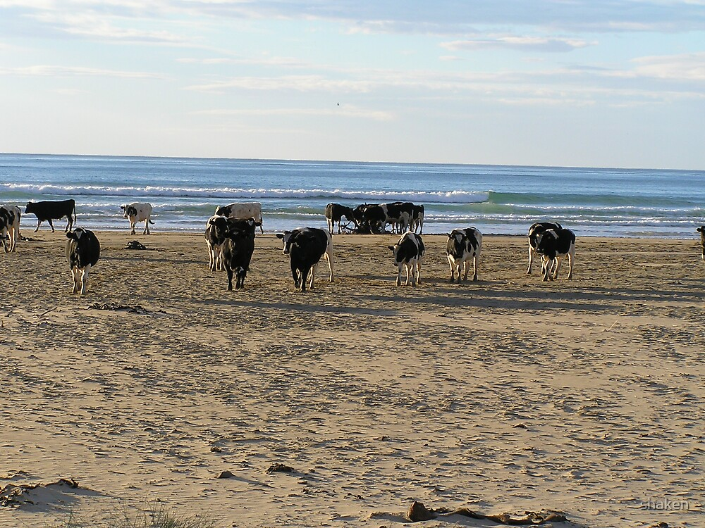 Beached Cows by shaken