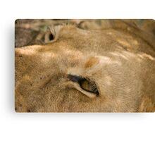 Lion's Eye Canvas Print