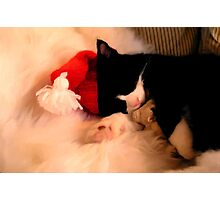 santa claus cat, kitten pussy Photographic Print